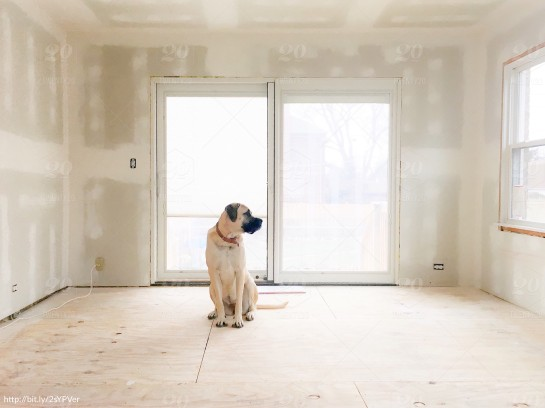 english-mastiff-dog-sitting-on-bare-floor-in-bare-room-with-fresh-drywall-and-bright-light_t20_EO3w1Y.comp